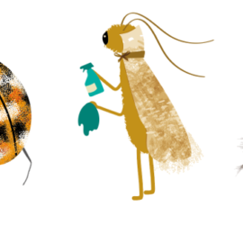 From Bugs to Bytes – supporting museums in the South West through the Pandemic and beyond.